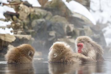 雪の露天温泉に浸かる猿の親子