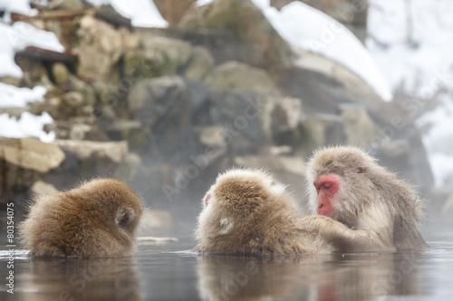 Foto op Canvas Aap 雪の露天温泉に浸かる猿の親子