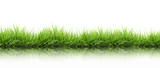 fresh spring green grass isolated - 80356633