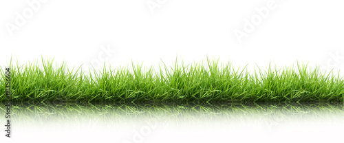 fresh spring green grass isolated - 80356604