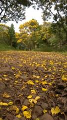 Caminho de folhas e flores