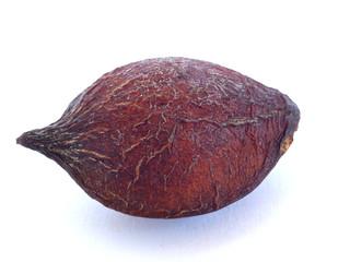 モモタマナの種
