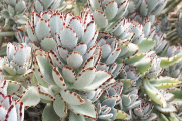 succulent plants with horn