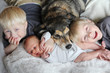 Three Happy Young Children Snuggling with Pet Dog in Bed - 80360493