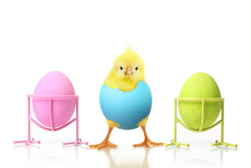 Cute little chicken and Easter eggs