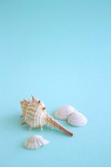 貝と青い背景 海のイメージ