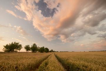 krajobraz polny po przejściu wieczornej burzy
