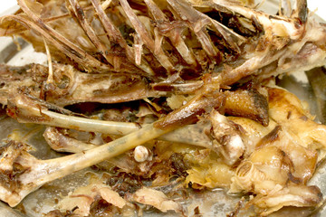 eaten goose bones