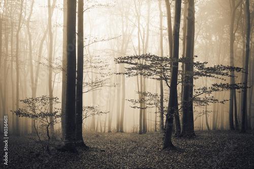 Panel Szklany Dark forest