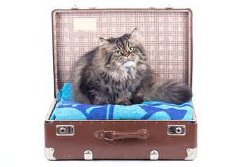 Persische Katze sitzt in Reisekoffer