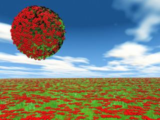heart flowers in a field