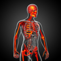 3d render medical illustration of the skeleton bone