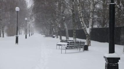 метель в парке