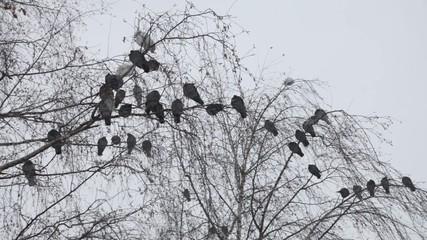 голуби на березе