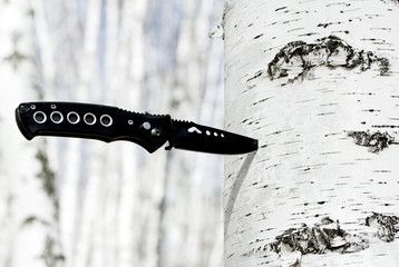 knife stuck in a tree