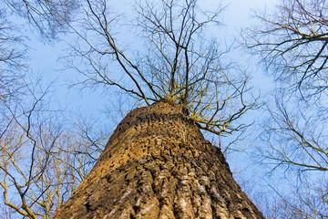 Blick am Baum entlang