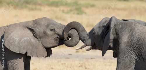 Fotobehang Olifant Two elephant greeting at a waterhole to renew relationship