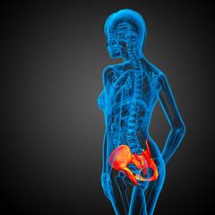 3D medical illustration of the hip bone