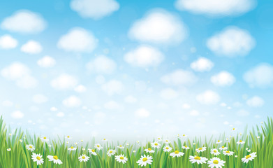 Vector summer landscape, blue sky , meadow and chamomiles.