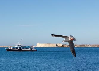 Crimea. Seagull above the Sevastopol bay.