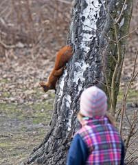 Kind beobachtet Eichhörnchen