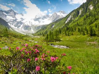 Frühling im Hochgebirge