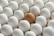 Organic white eggs and one brown in carton crate - 80382220