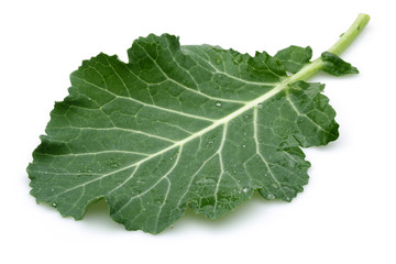 Fresh Cabbage leaf