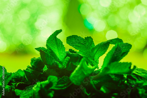 leaves of mint on green background - 80386041