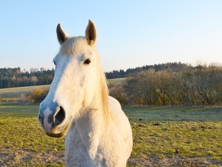 White horse wide angle shot.
