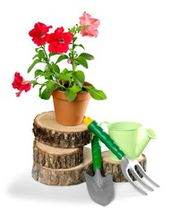 Gardening. Outdoor gardening tools and flowers