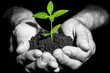 Agricultural. Hands holding green sprout with soil