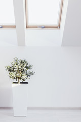 Houseplant in white interior