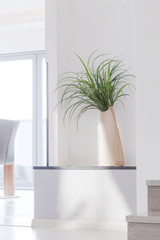Houseplant in contemporary interior