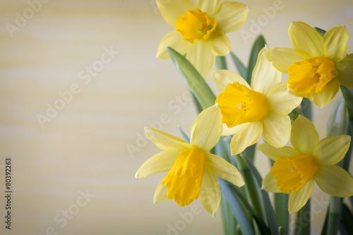 Canvas Narcis Daffodils.