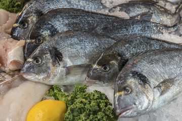 Fresh whole Sea Bream fish on a fishmonger's counter
