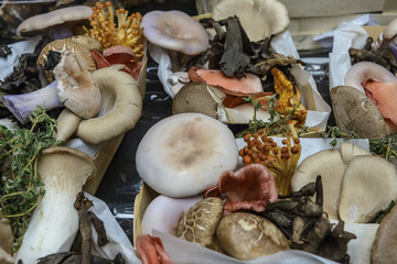 Variety of gourmet edible exotic mushrooms on a market stall