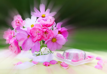 Pink cosmea bouquet isolated.