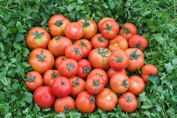 Tomatoes and parsley.