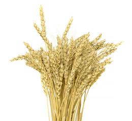 ripe yellow wheat ears