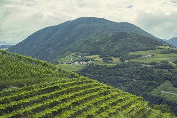 views of the Alps and the vineyards in northern Italy