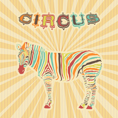 zebra with color stripes as circus illustration
