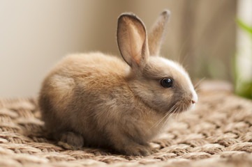 Little cute baby bunny