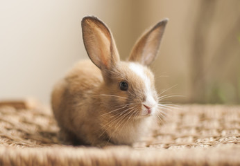 Little cute baby bunny 02