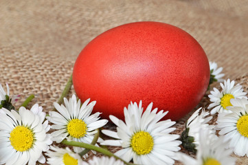 Red Easter egg and daisies