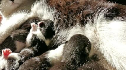 Newborn kittens drink milk (3)