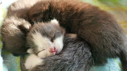 New born kittens (4)