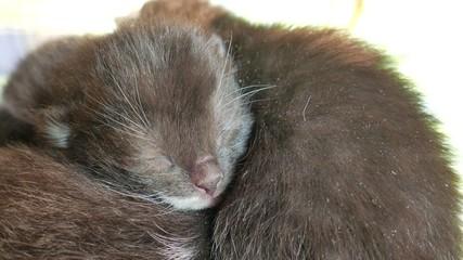 New born kittens (5)