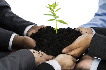 Business people holding soil with seedling