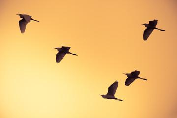 flock of birds flying at orange sky background